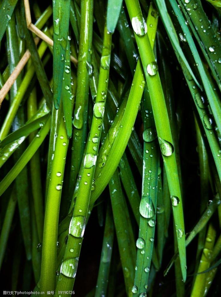 雨滴 水珠水滴图片