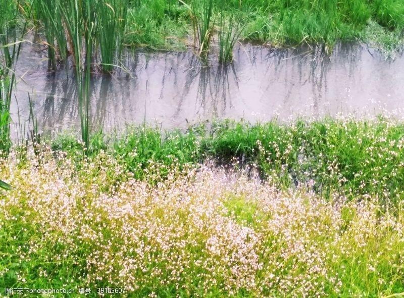 水草 花河边图片