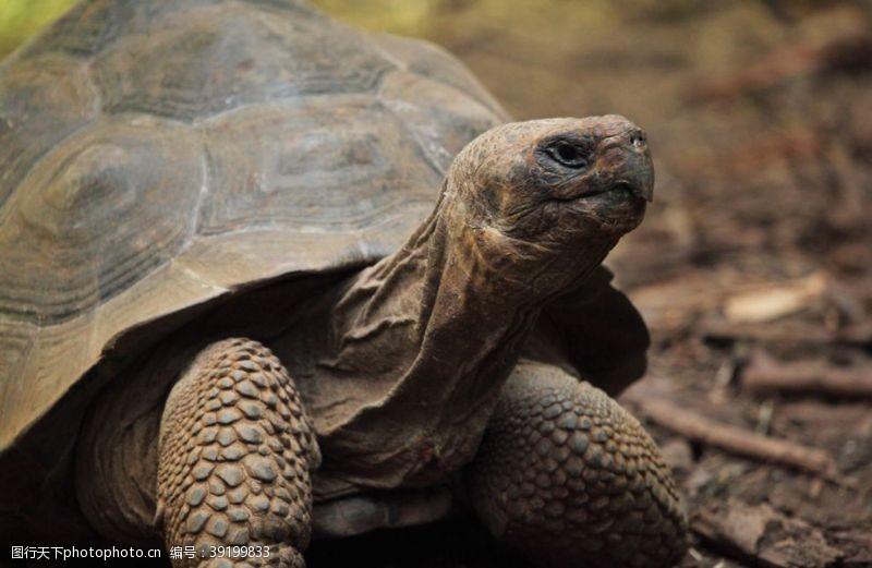立体画 旱龟图片