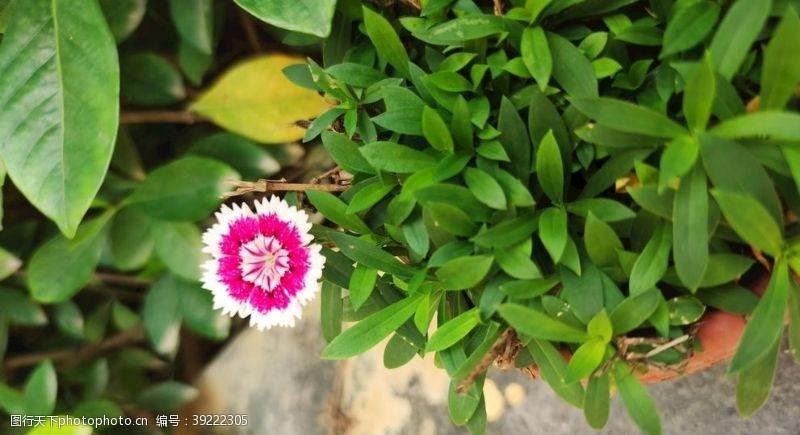 显眼 鲜艳小花图片