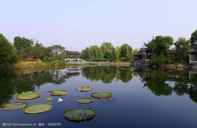 水草 西溪湿地风景图片