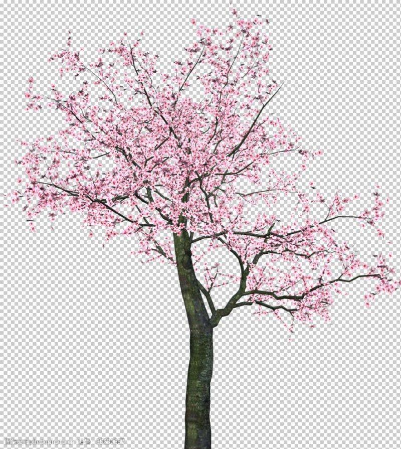 日本旅游 樱花图片