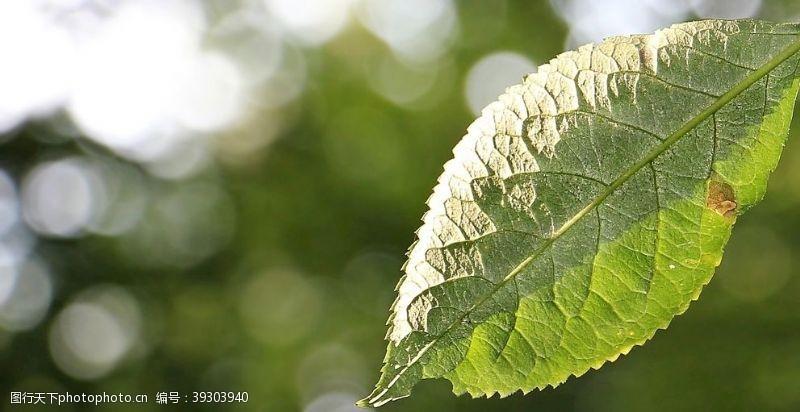 立夏树叶图片