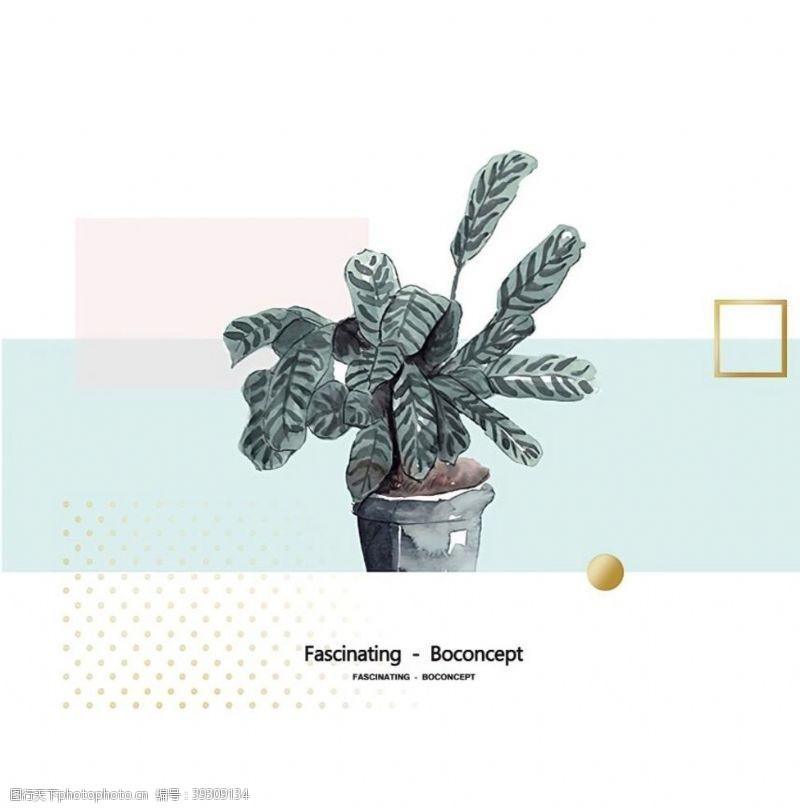 北欧植物盆栽图片