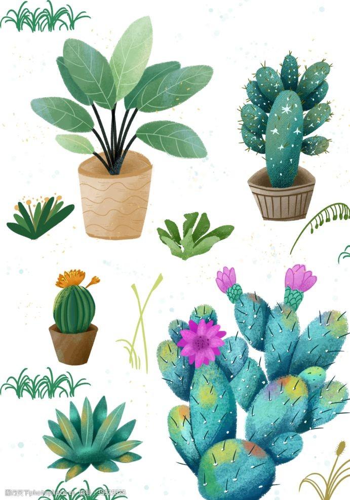 插画头像扁平插画植物仙人掌多肉图片