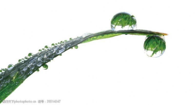 雨滴露珠图片