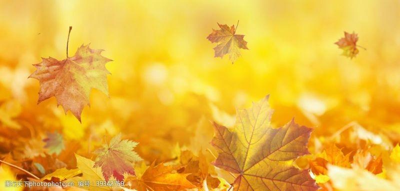 秋天促销秋天图片