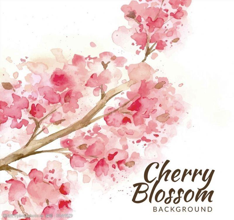 水彩绘盛开樱花图片