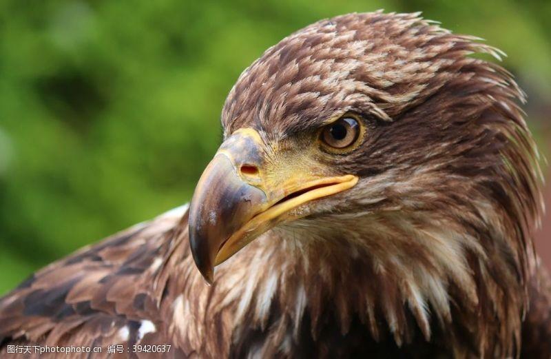 96dpi老鹰图片