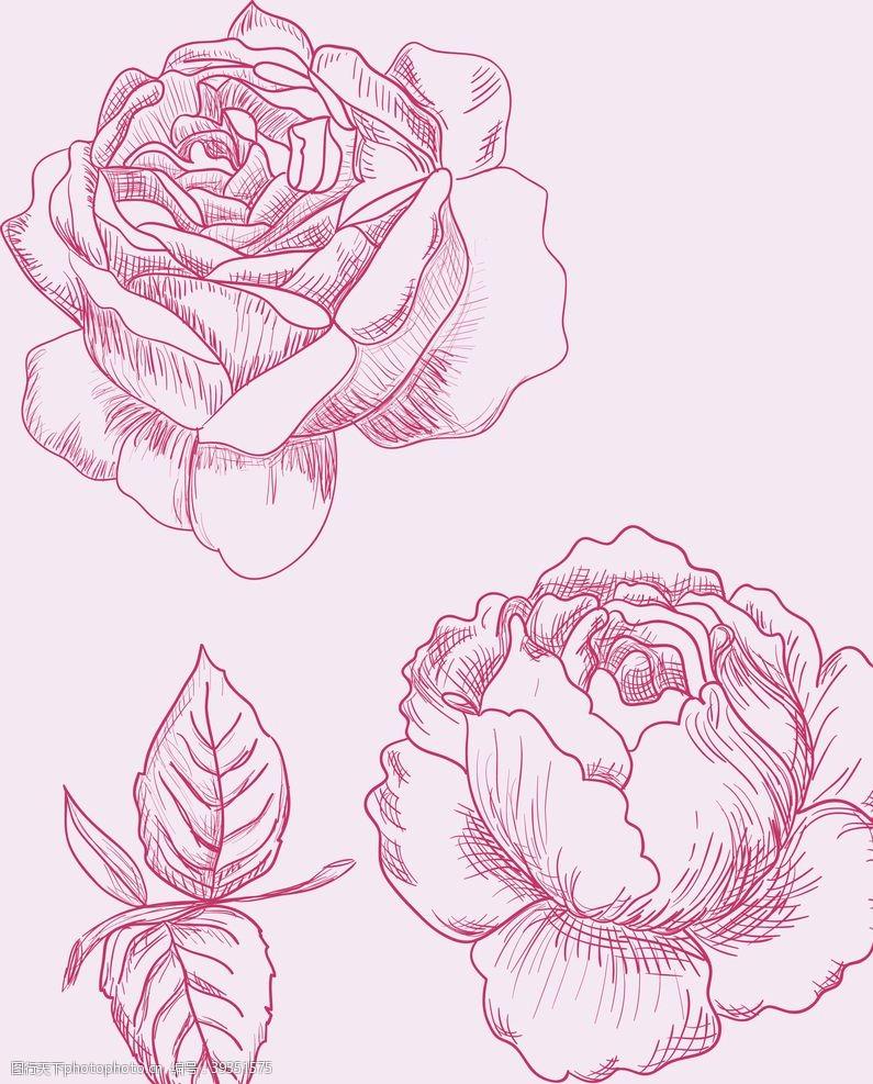 欧式花纹玫瑰花图片