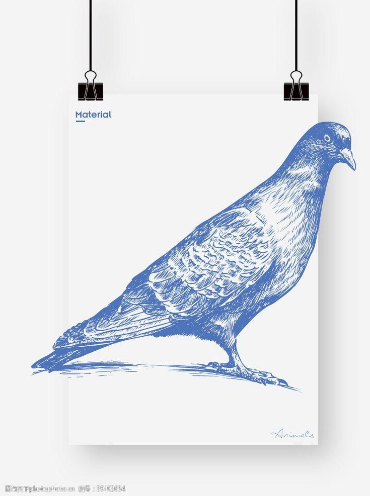卡通小鸟鸽子图片