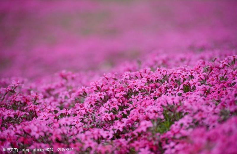 草坪红色花朵图片