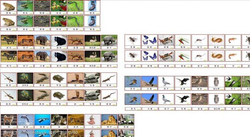 早教中心动物卡片图片