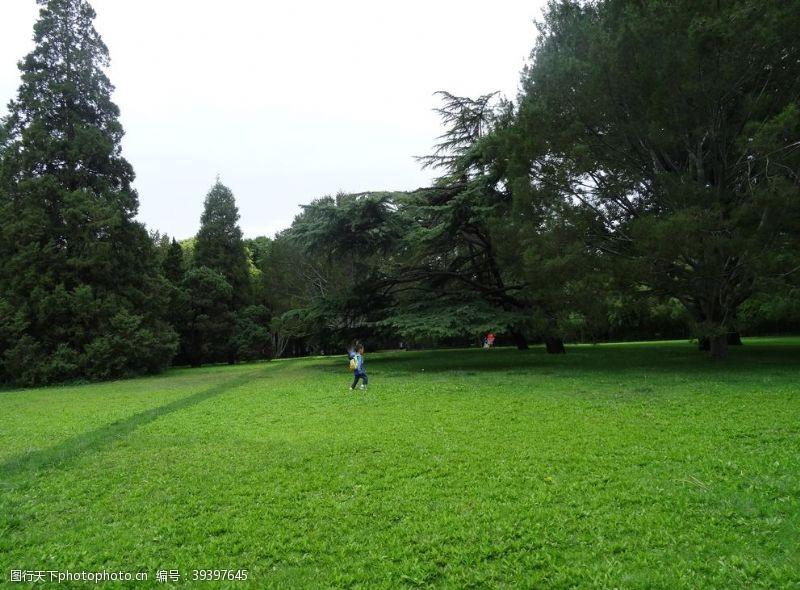 草坪草地图片