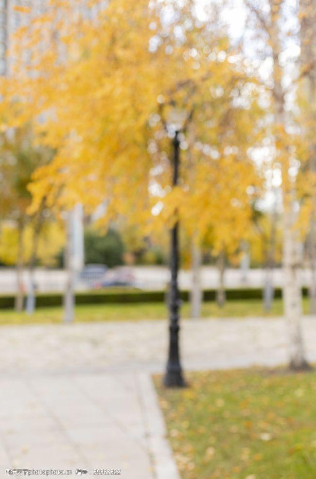 秋天背景秋季黄色虚化背景图片
