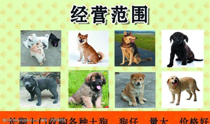 收购狗名片图片