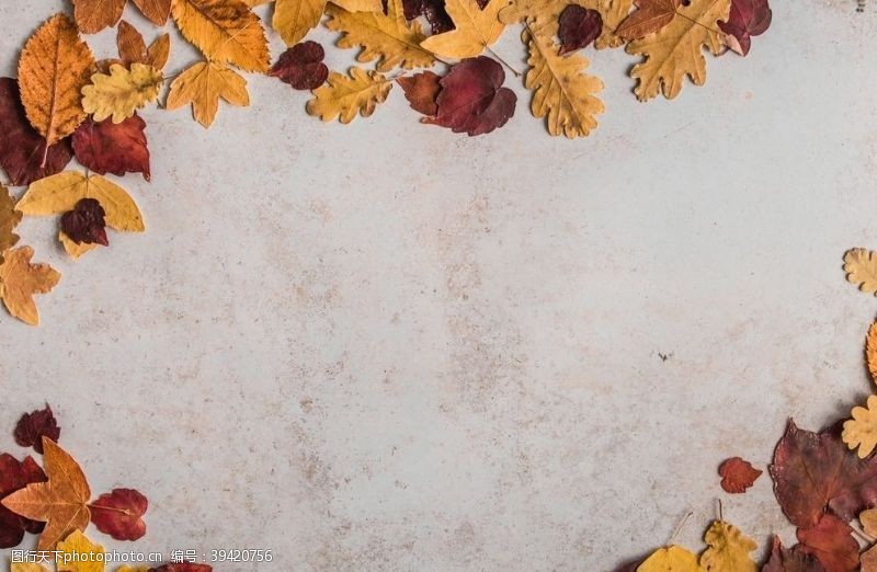 枫叶落叶图片