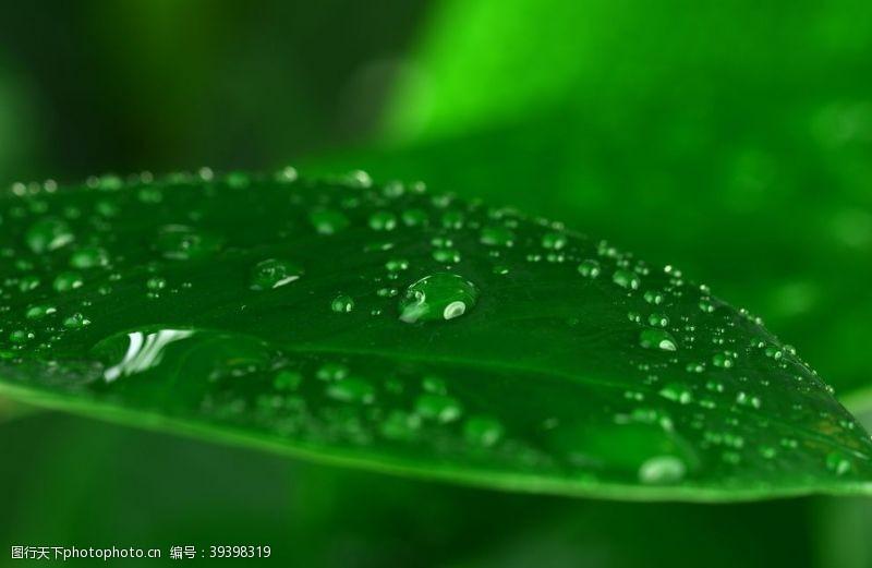 绿色背景水滴图片