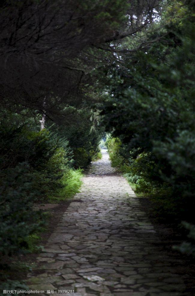 草坪树森林人行道自然图片