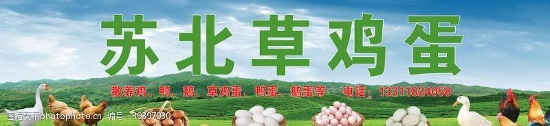 鸡蛋海报苏北草鸡蛋图片