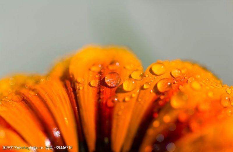 感受橙色的花图片