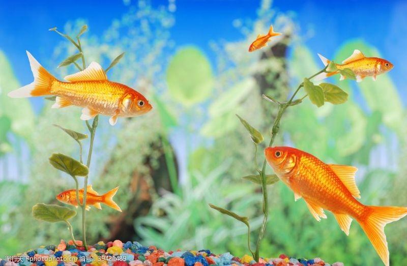 室内装饰画金鱼图片