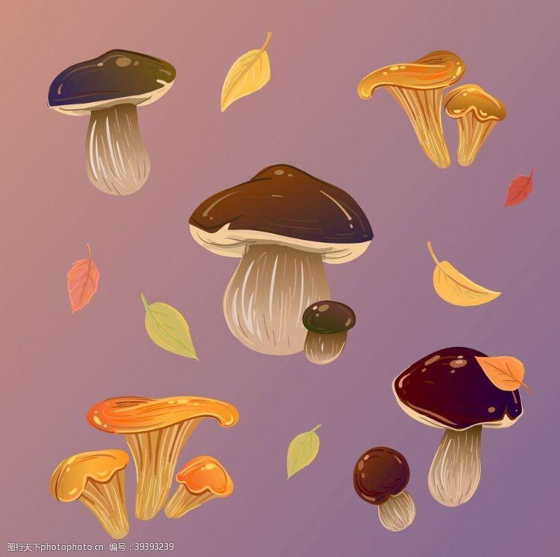 菇类蘑菇图片