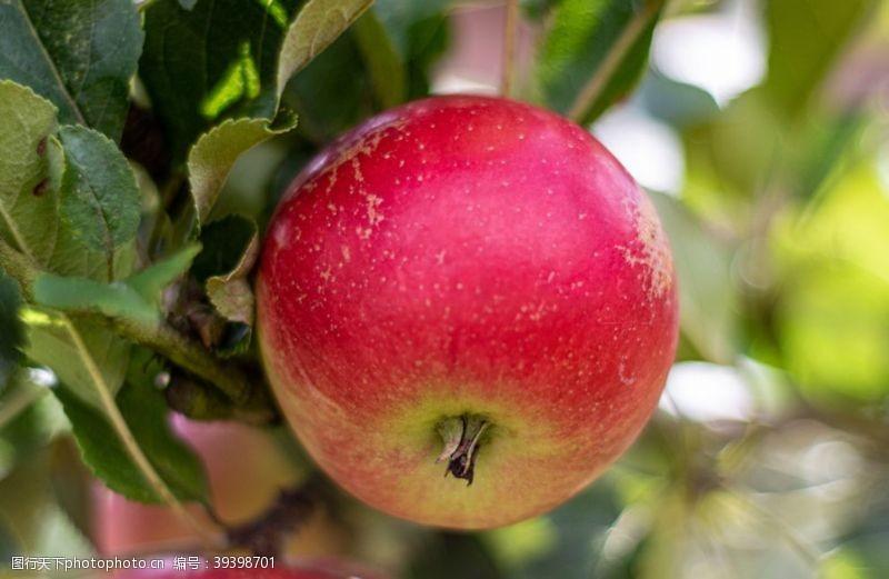 画册苹果图片