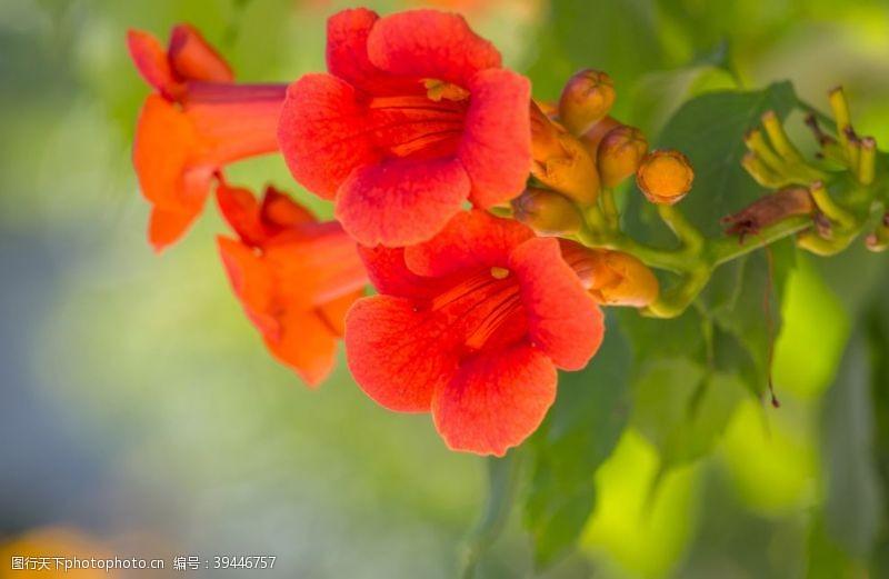 感受神奇的五颜六色的花图片