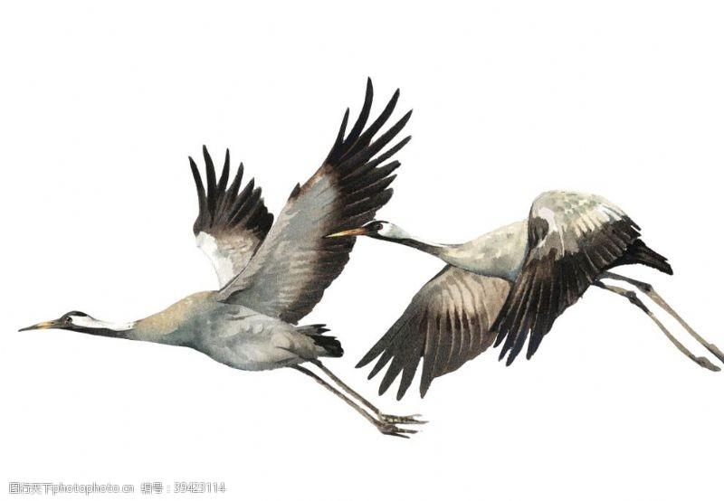 鸟类手绘大雁素材图片