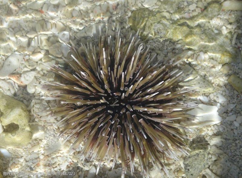 海底海胆图片