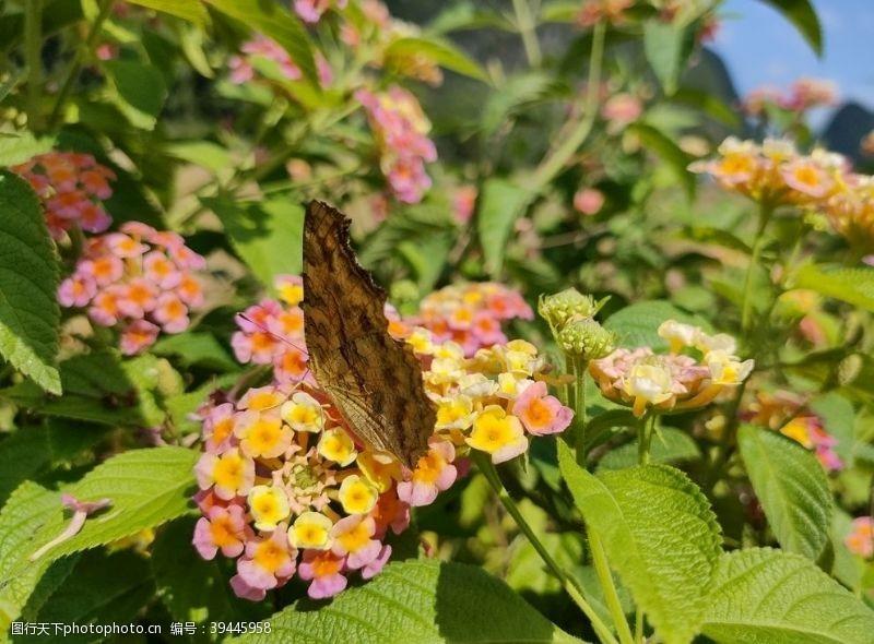 花丛花朵图片