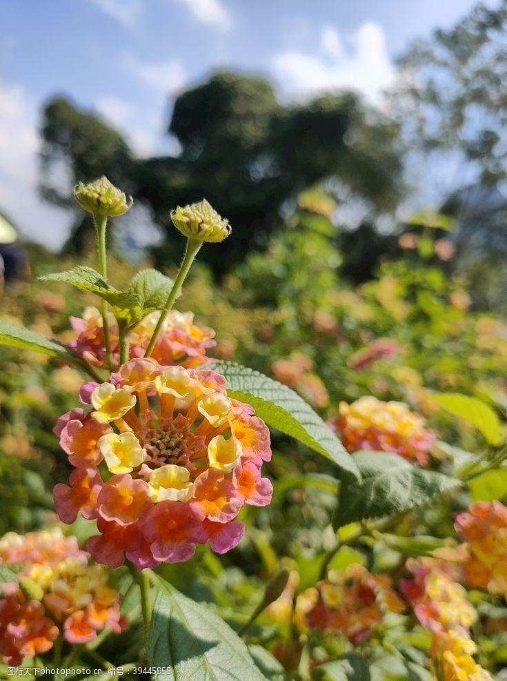 花丛花儿图片