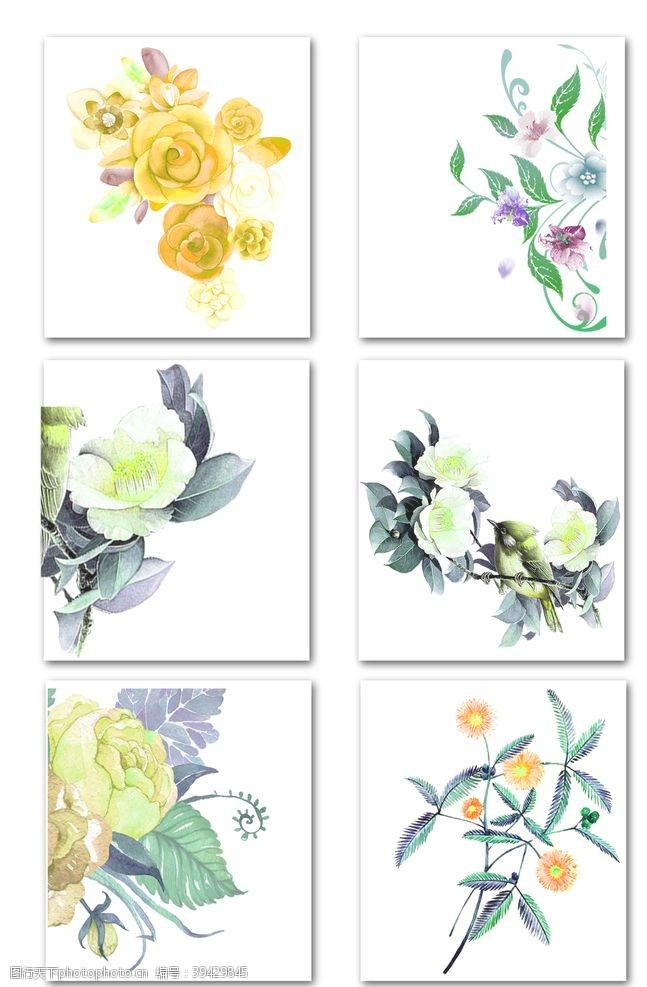 热带叶花素材图片