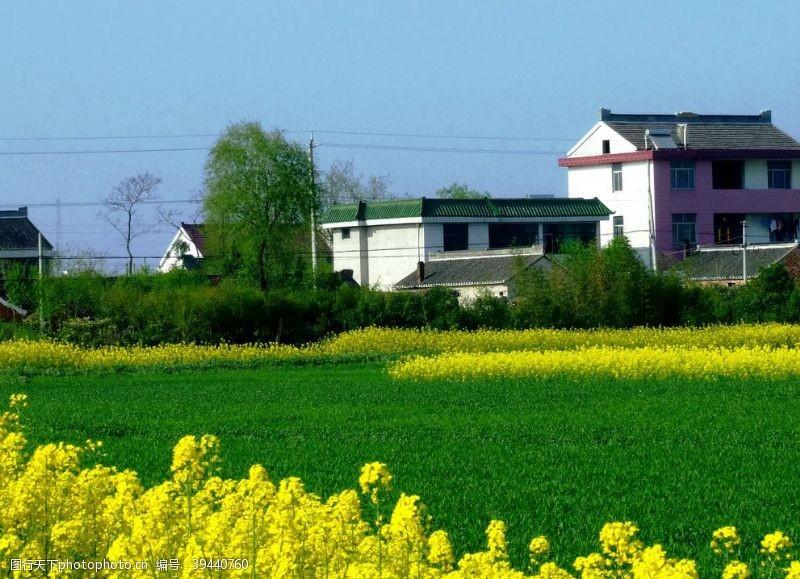 巨幅田园风景图片