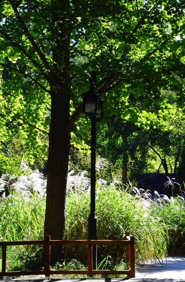 树木园林风景图片
