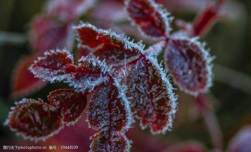 24节气霜降图片