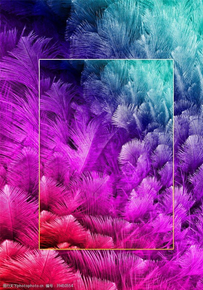 炫彩高清漂亮羽毛背景JPG图片