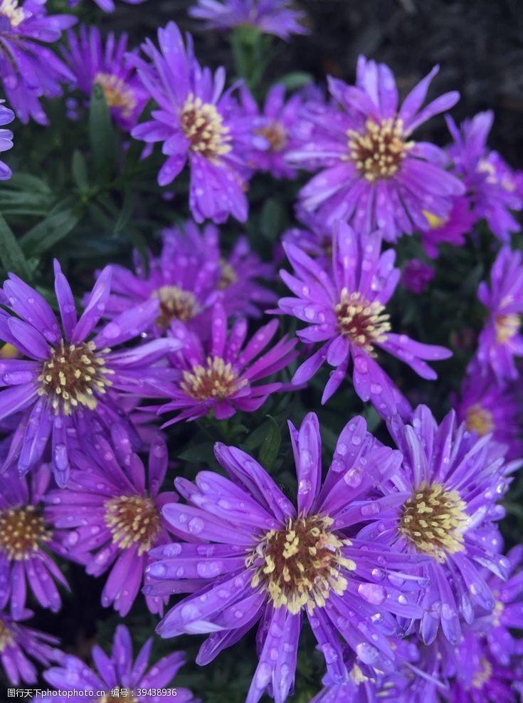 鲜艳花卉图片