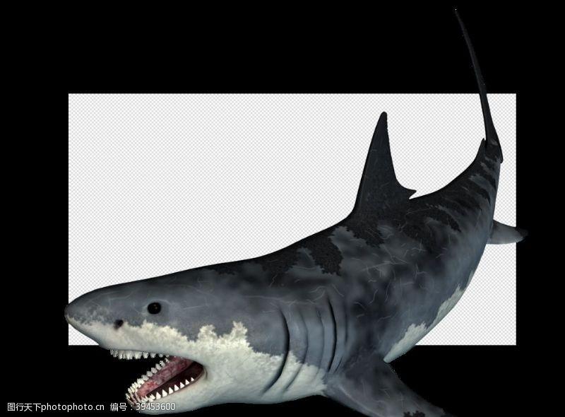 海底鲨鱼鲨图片