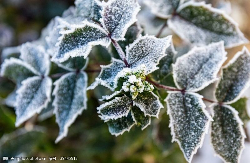 霜降植物图片