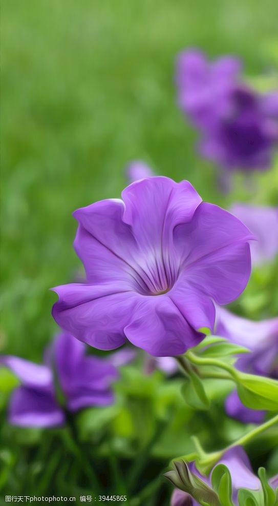 鲜艳紫色的花图片