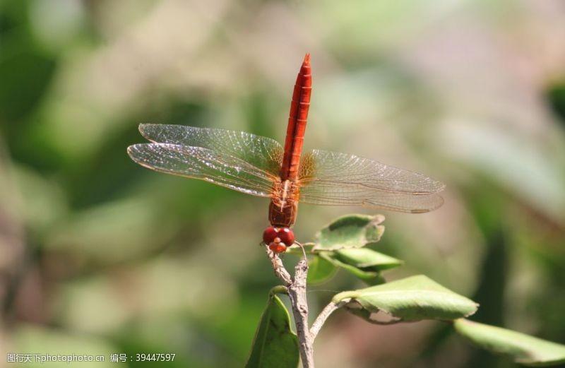 嬉戏蜻蜓图片