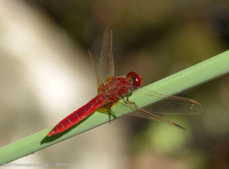 翅膀蜻蜓图片
