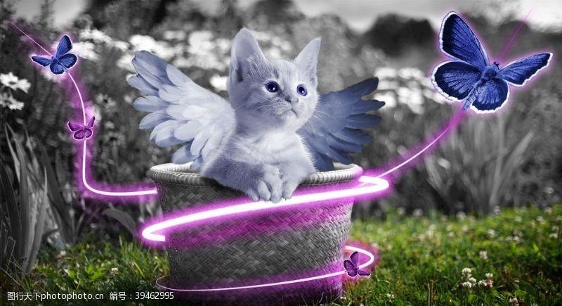 翅膀猫猫图片