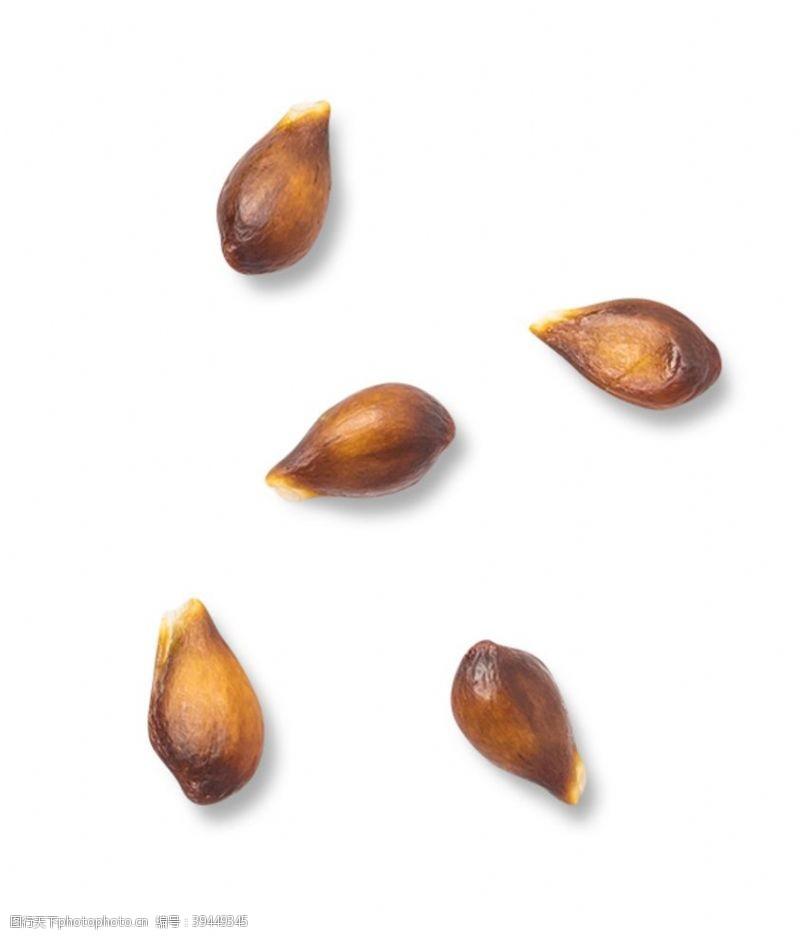 鸭梨苹果籽图片