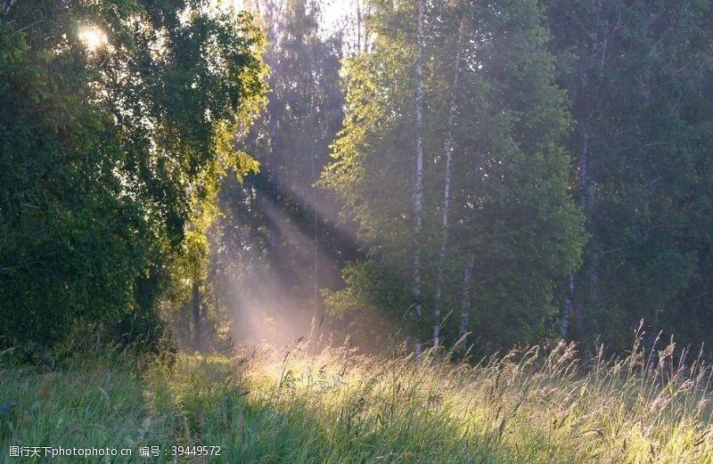 剪影树林图片