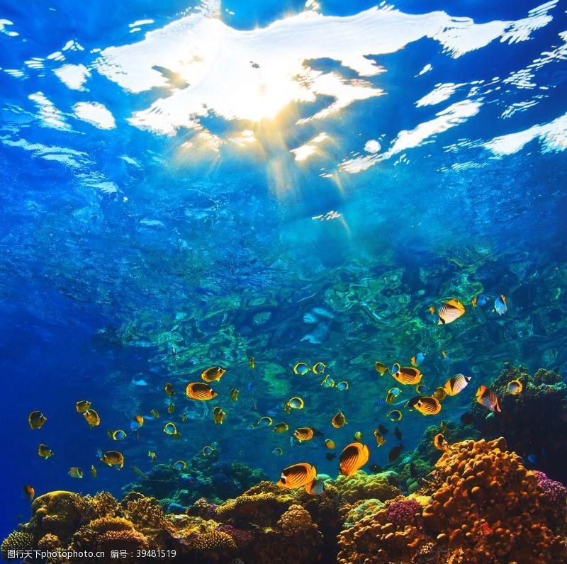 珊瑚海底图片