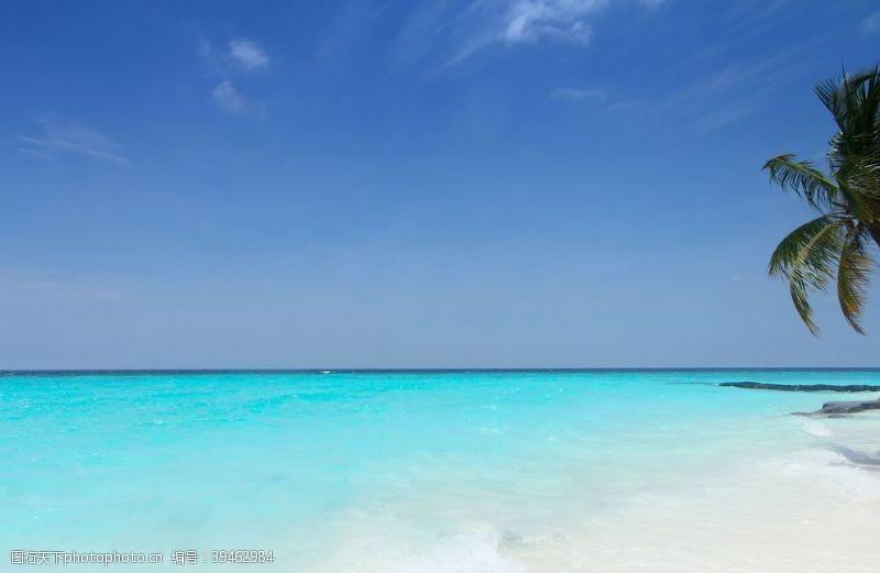 椰子树海滩图片