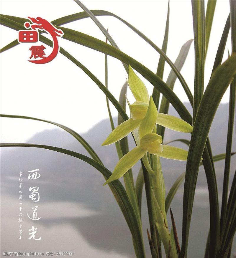 自然风光植物背景图片